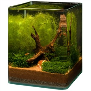 dekoration f r das nano aquarium wurzeln steine h hlen. Black Bedroom Furniture Sets. Home Design Ideas
