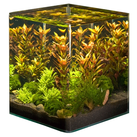 nano aquarium tierwelt einebinsenweisheit. Black Bedroom Furniture Sets. Home Design Ideas
