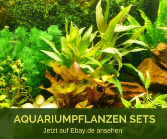 Aquariumpflanzen Sets bei Ebay.de